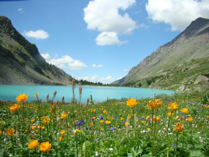 Горный Алтай. Цветы