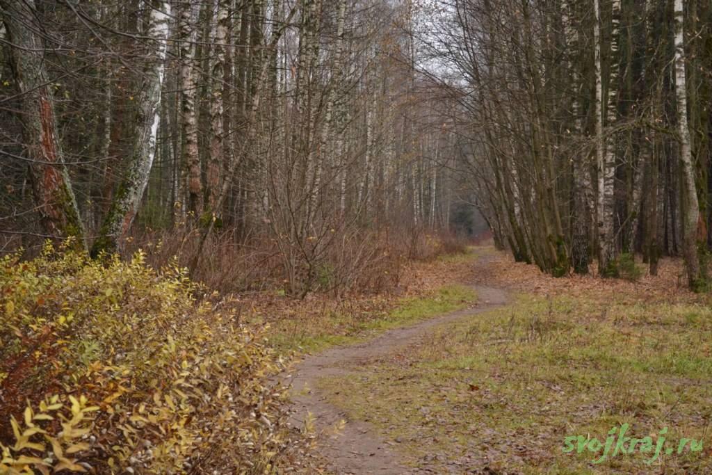 Свой путь. Тропинка в лесу. Лосиный остров