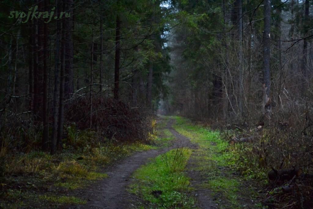 Свой путь. Тропинка в темном лесу. Лосиный остров