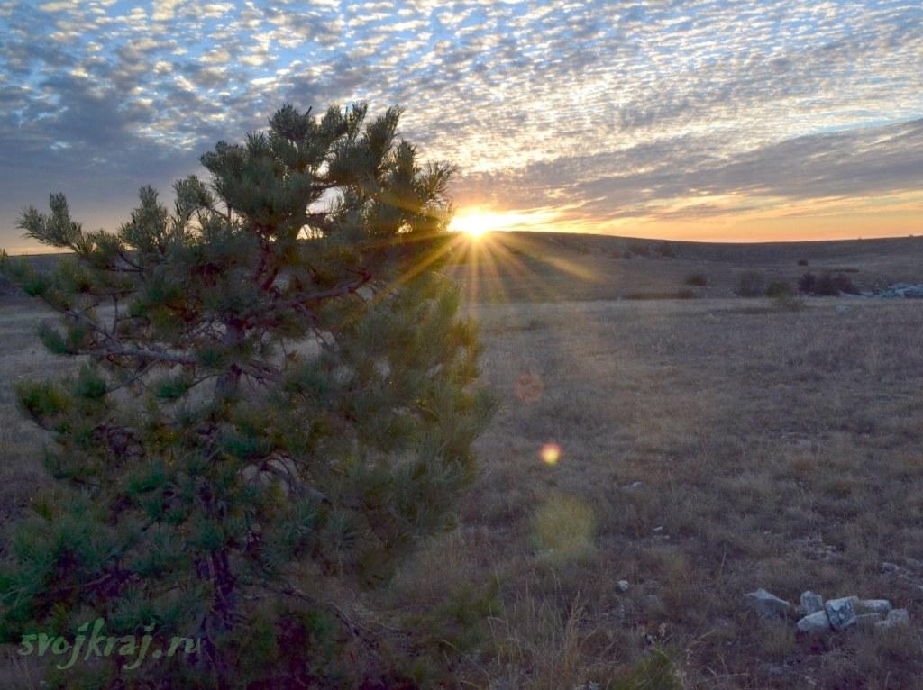 Сосна, красивые облака и закат