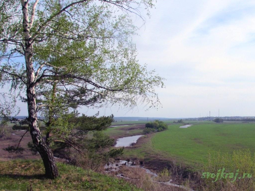 Дерево у обрыва над рекой