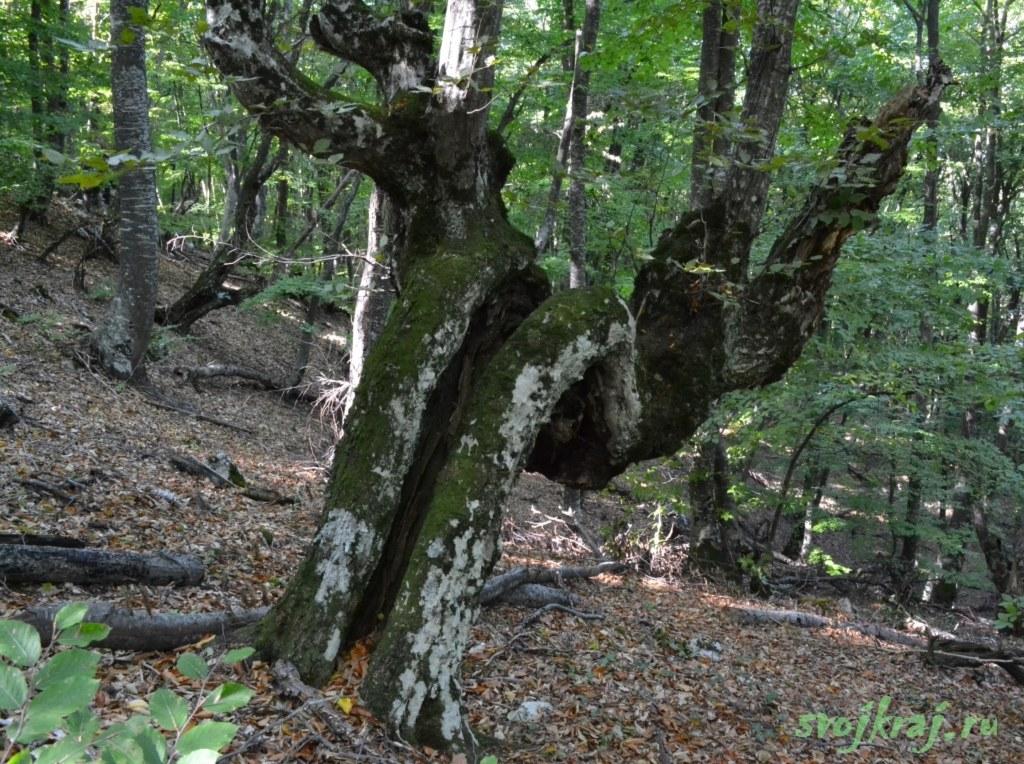 Искореженное дерево
