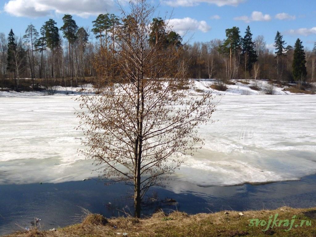 Ранняя весна. Дерево у воды