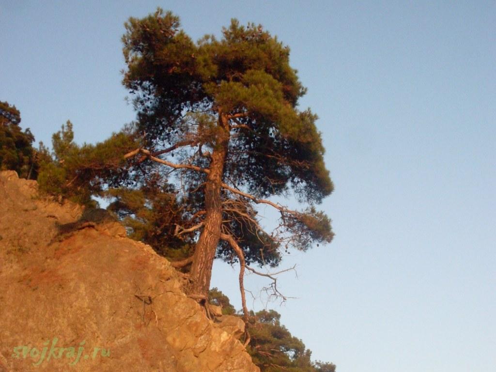 Дерево на склоне горы