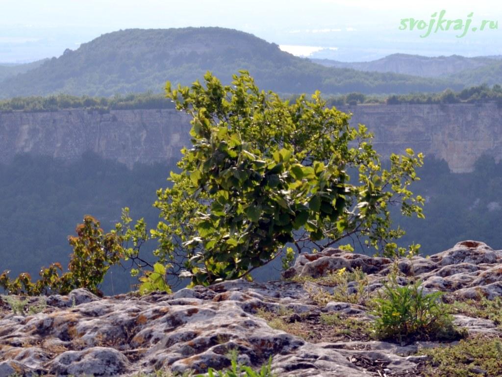 Деревце над обрывом