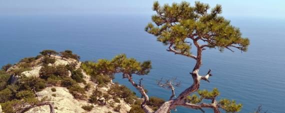 Найди свое дерево. Метафорические картинки