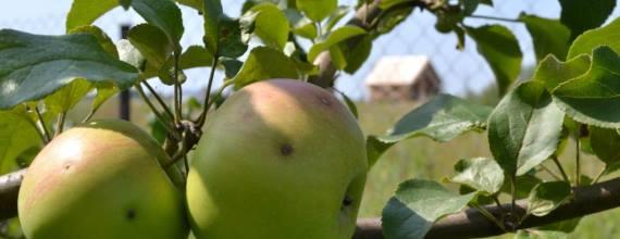 Яблоневый сад. Домик в деревне