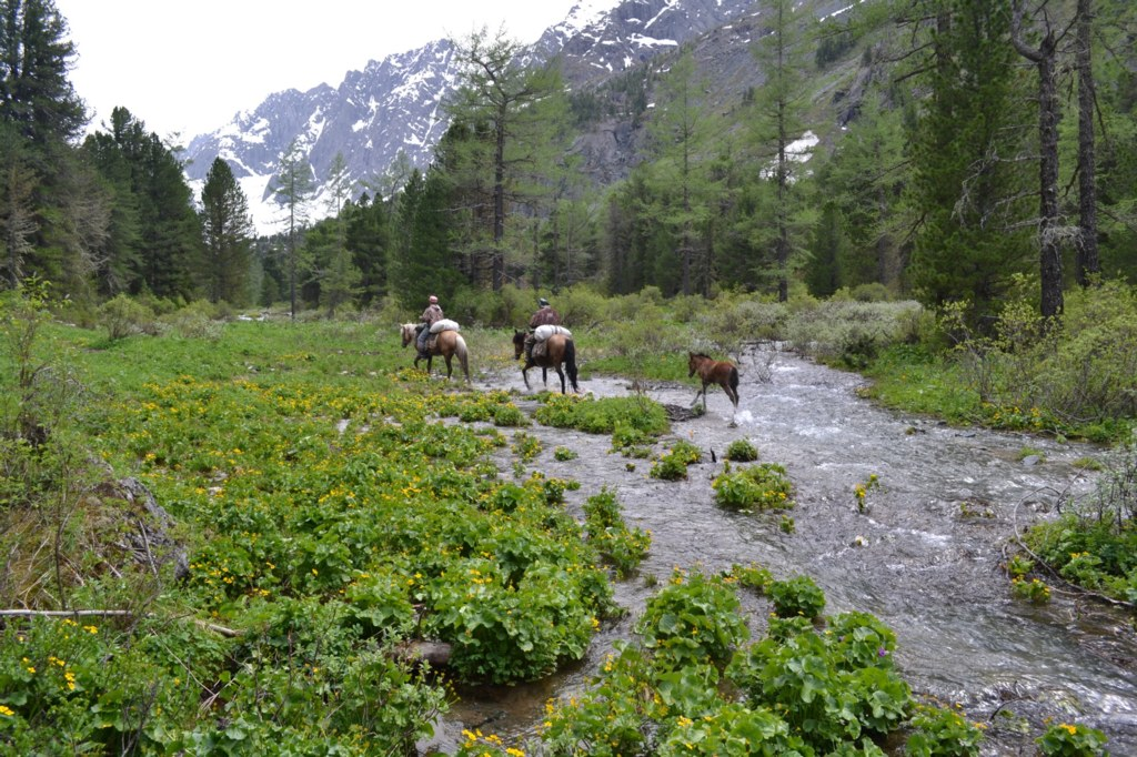 Алтай. Река Куйгук. Лошади