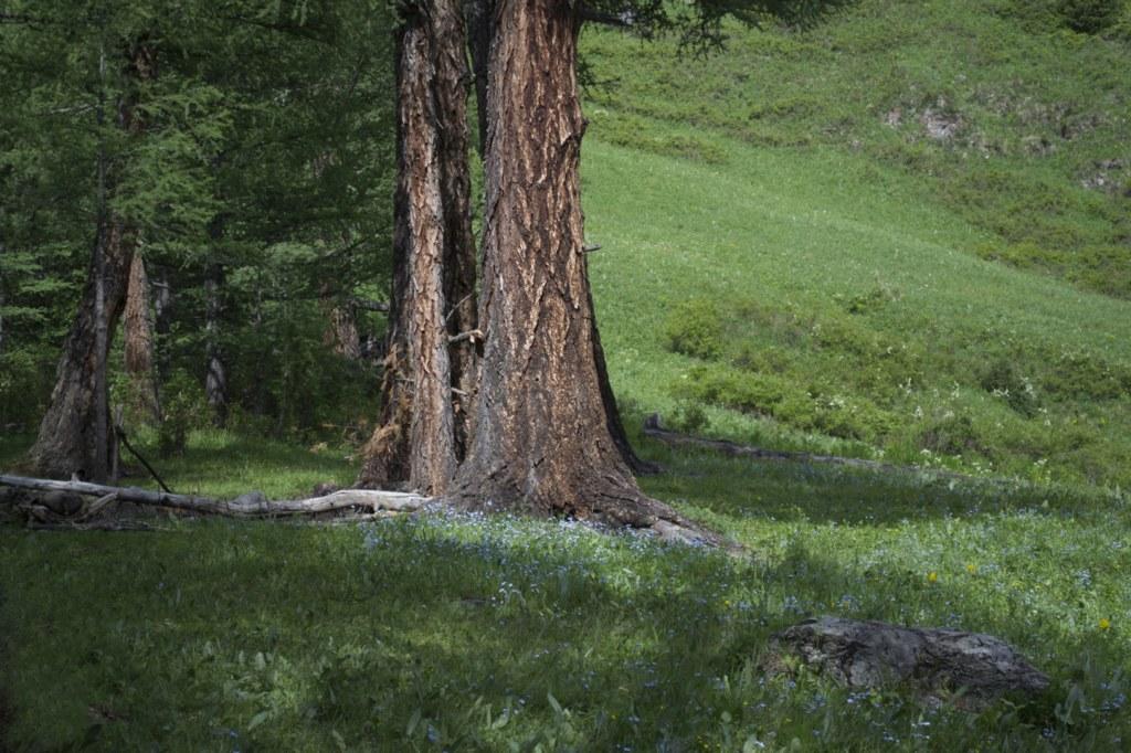 Поляна. Старое дерево