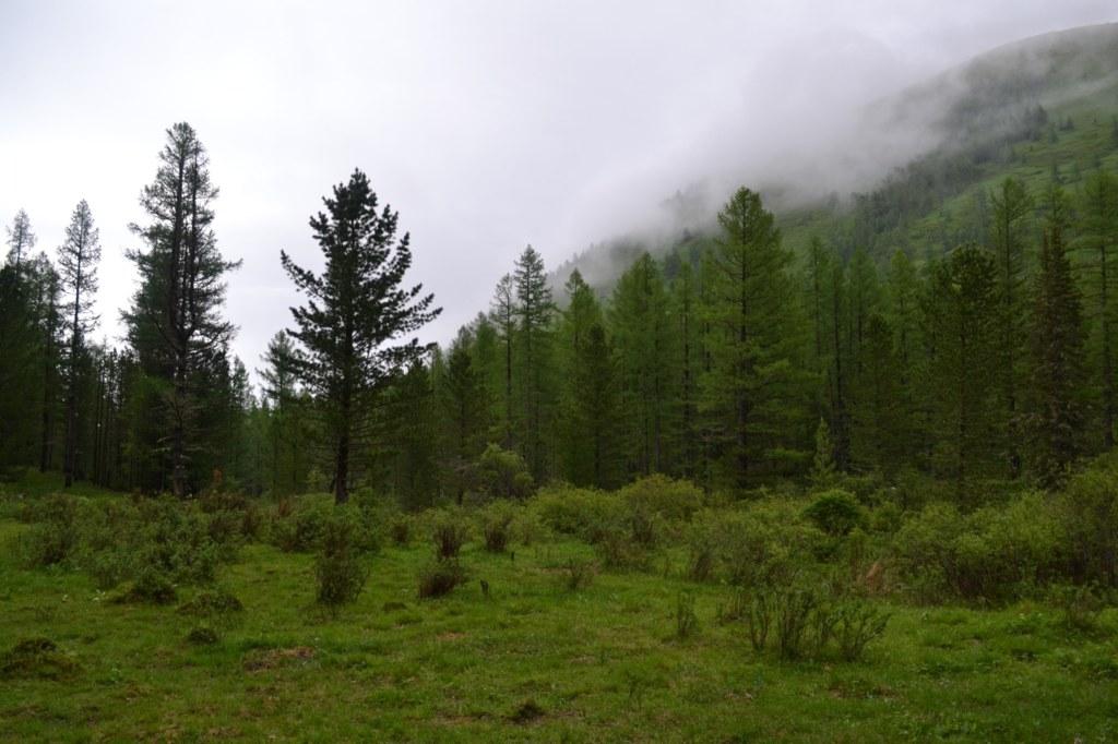 Алтай.  Дождливый день