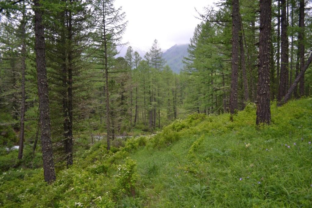 Алтай. Горы и лес