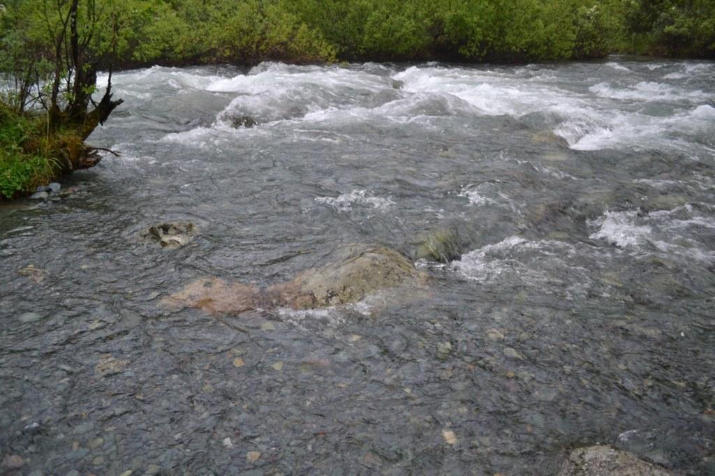 алтай. Река Куйгук